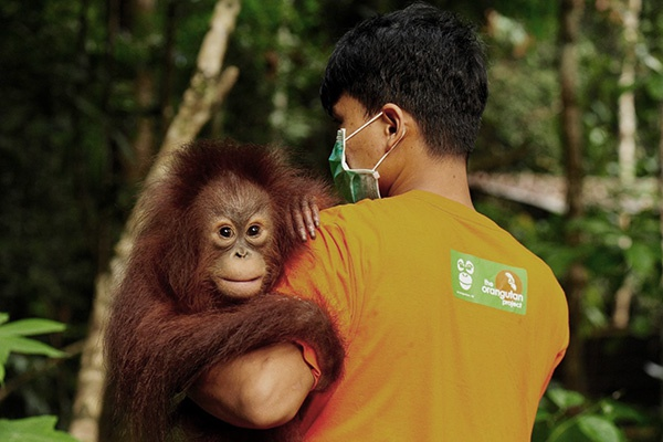 Rescue, Rehabilitate and Release orangutans